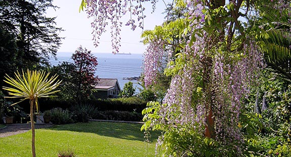 wysteria from front door